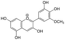 Antocianina