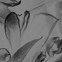 clementine & jaxson - Page 2 X77MHT9W_o