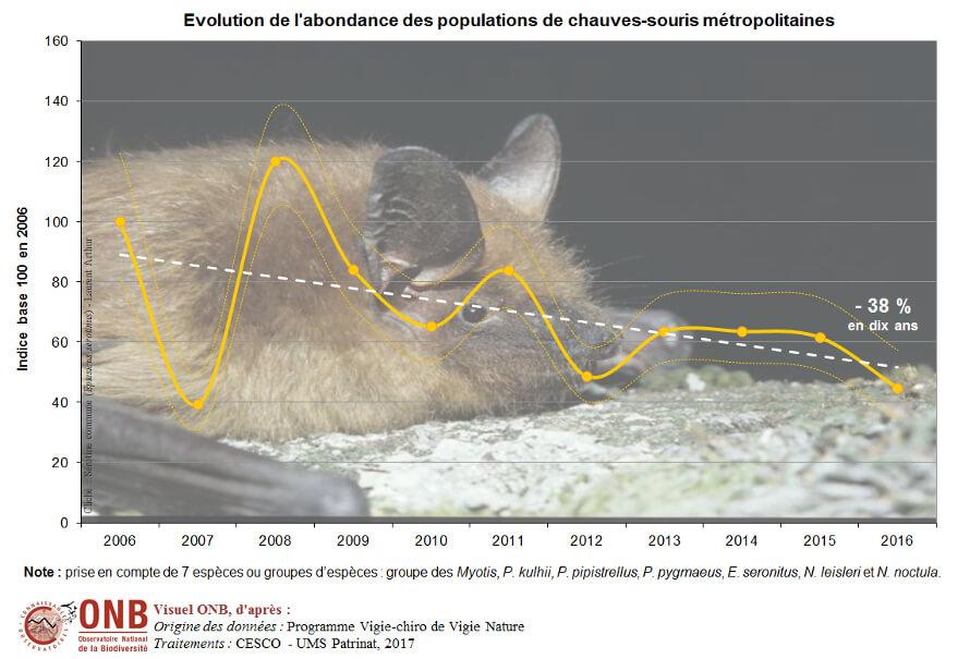 Abondance des populations de chauve-souris métropolitaines
