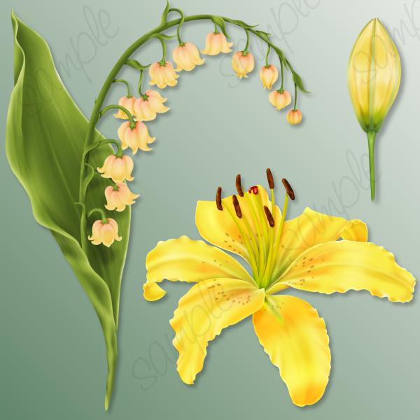 Delightful doodles bmeadow flowers