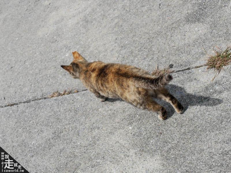 奧武島貓咪