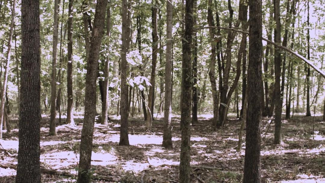 Bigfoot Path of the Beast 2020 1080p WEBRip AAC2 0 x264-BobDobbs