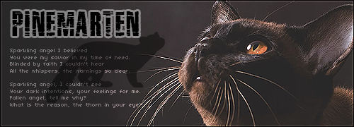 Shadowclan Kittenhub! QqlKhjEW_o