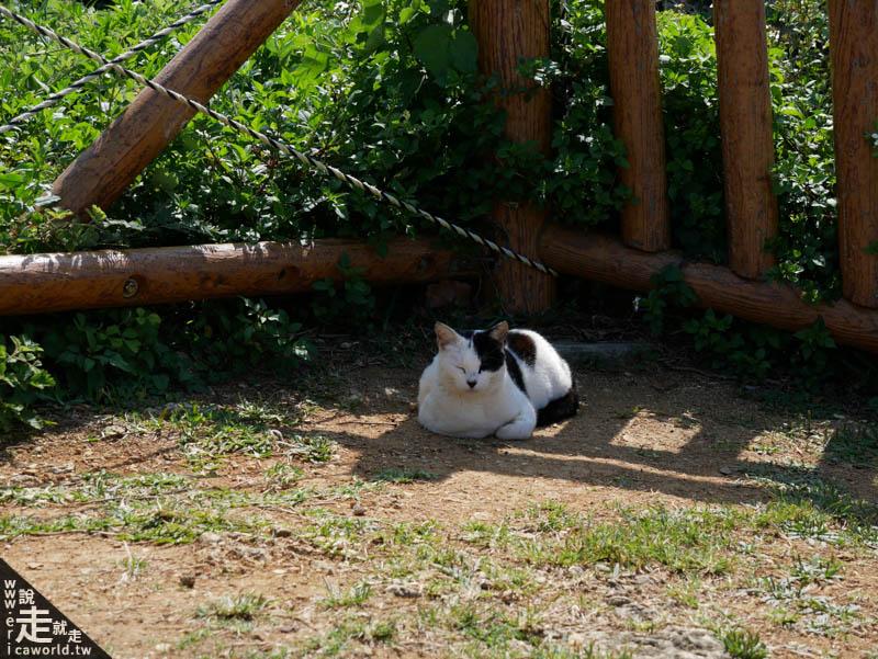 知念岬貓咪