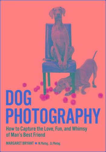 Dog Photography - How To Capture The Love Fun And Whimsy Of Mans Best Friend